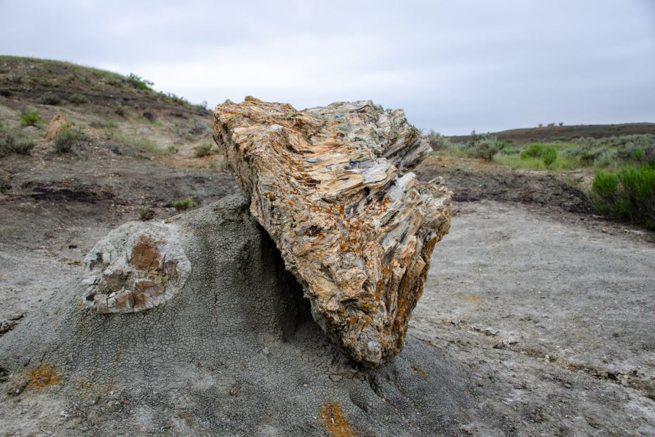 A petrified tree is shown while Hiking the Petrified Forest Loop at Theodore Roosevelt National Park