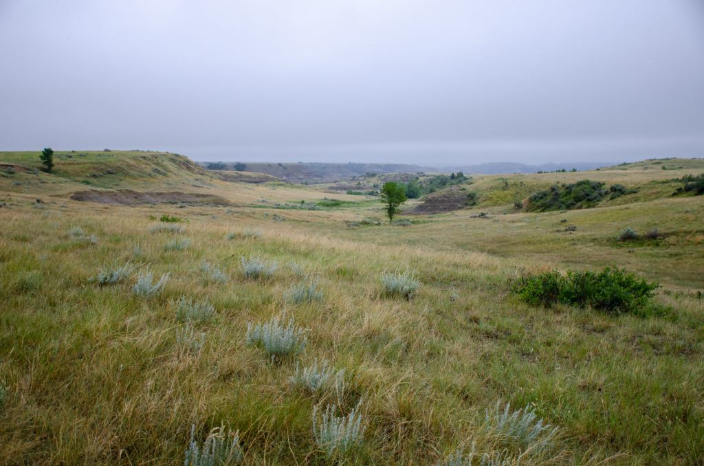 The prairie is shown on the Petrified Forest Loop at Theodore Roosevelt National Park