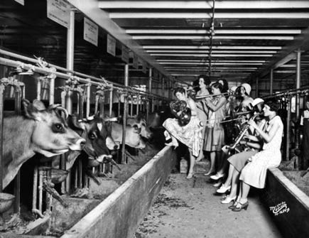 serenading cattle