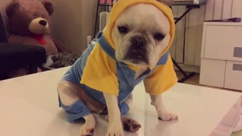 What Youve Never Seen A Dog In A Minions Costume Before