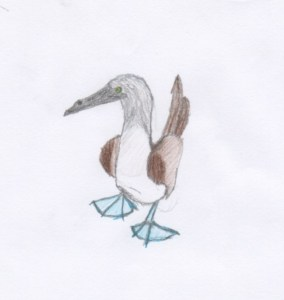 Blue-footed Boobie (drawn by Bryce)