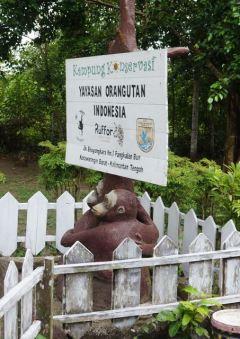 Orangutan conservancy