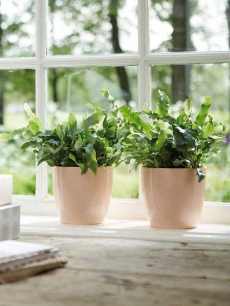 3 tips voor mooie kamerplanten in de winter  Huis en