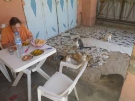Sieben Katzen und zwei Essen