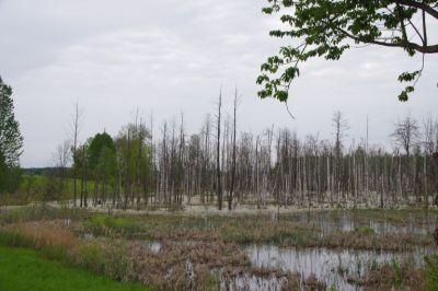Feuchtgebiete in Masuren