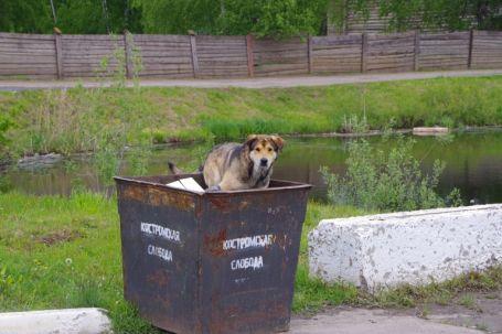 Tierische Resteverwertung