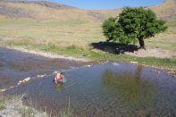 ...und morgens noch ein kühles Bad bei 40° Außentemperatur