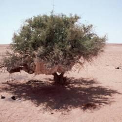 Die Habseligkeiten der Nomaden werden in Bäumen verstaut