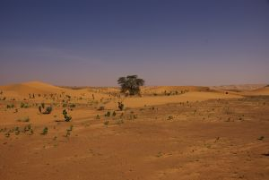 Weit und breit der einzige Baum (Akazie)...