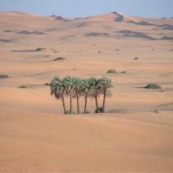 Wunderschöne Dünenlandschaft zwischen...