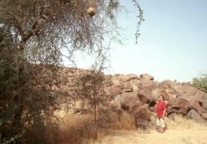 Der Weber- und der Paradiesvogel