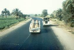 Kamel-Transport