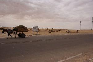 Touristen-Kamelkarawanserei bei Douz