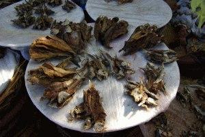 ..Exportschlager:Trockenfisch...