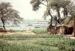 Am Nil