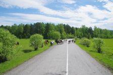 """Nach 80 Kilometern Schotterpiste, wieder Asphalt und neue """"Verkehrsteilnehmer"""""""