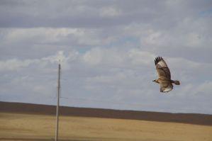 ...und Greifvögeln viele Freiheiten