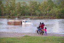 Das Ural-Flusskrokodil in seinem Element