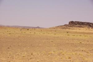 Meistens bewegt man sich auf Kamelen weiter...