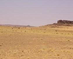 2590_Mauretanien_2012