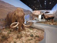 Im Museum eine imposante Ausstellung von Tier und Mensch von vor 36000 Jahren.