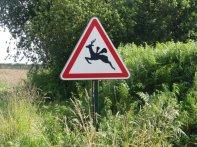 Nur in der Bretagne - eine neue Spezies, der geflügelte Hirsch