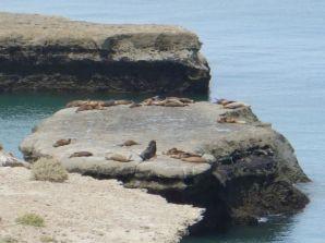 Hier wohnen Seelöwen...