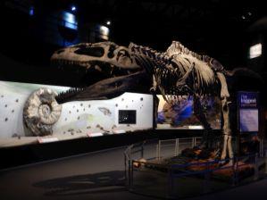 Gleich gegenüber, das paläontologische Museum...