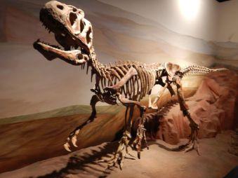 ...mit imposanten prähistorischen Funden...