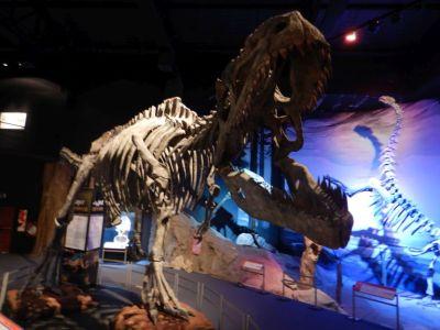 ...verschiedener Dinosaurierarten und...