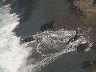 ... sie nutzen die hohen Wellen zum bequemen Ein- und Ausstieg aus dem Wasser.