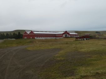 In dem größten Schafschurstall der Erde, ...