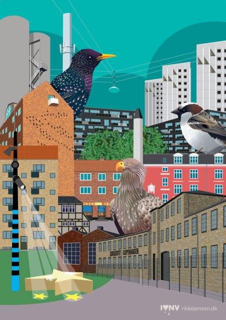 Fuglekvarteret collage 4 - stær, ørn, gråspurv, glentevej, stæregavl