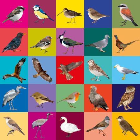 Fugle postkort