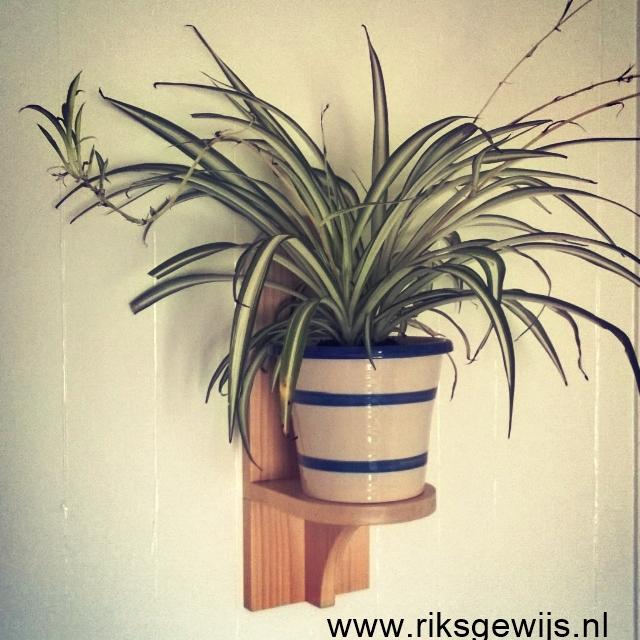 Planten hanger