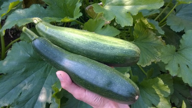 Gevulde courgette (2)
