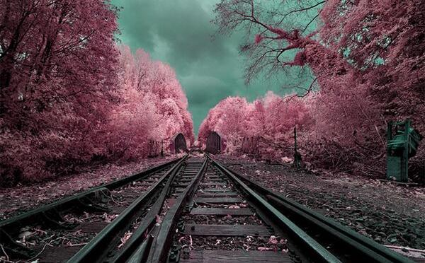Twitter / saatchi_gallery: Check out this surreal infrared …