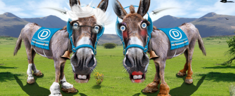 bernieandhillarydonkeys