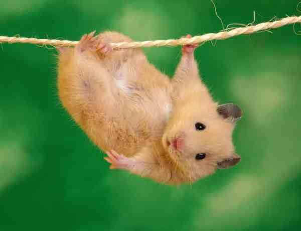 cute-hamster-photos