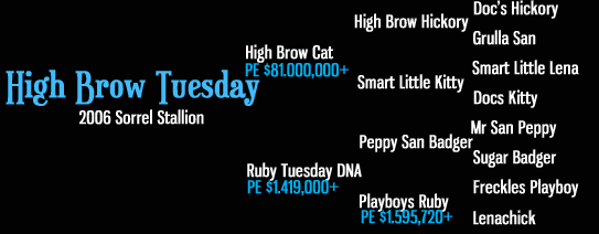 High Brow Tuesday pedigree (High Brow Cat x Ruby Tuesday DNA)