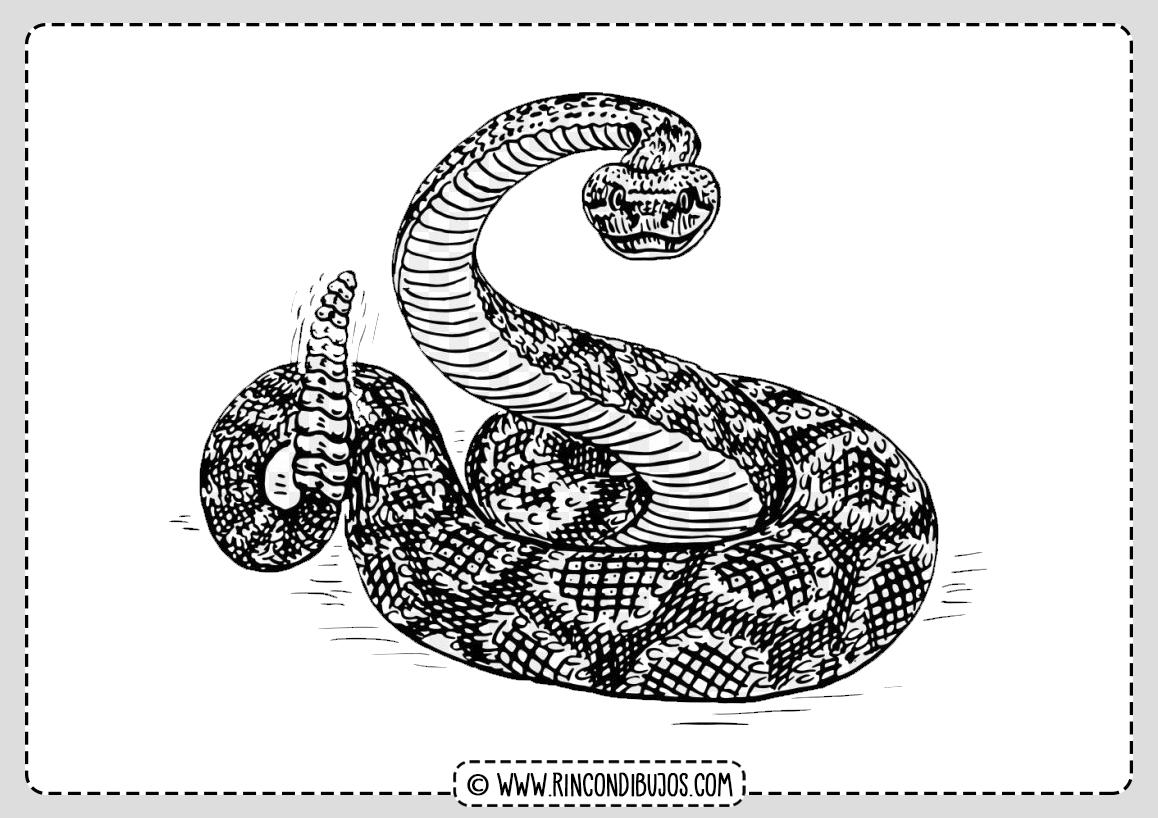 Cascabel Snake Coloring