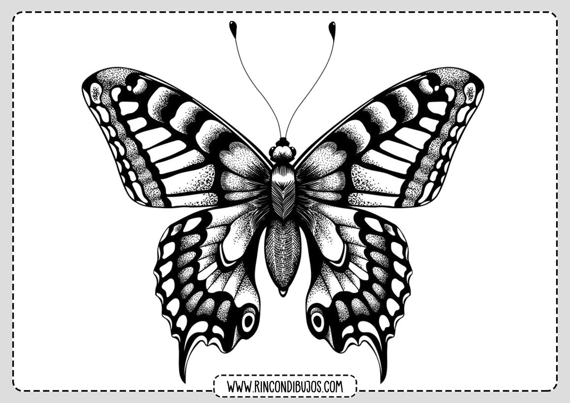 Bonito Dibujo Mariposa Para Colorear