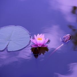 water-nature-blossom-plant-sky-photography-652397-pxhere.com