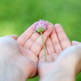 regala-el-rincon-de-mindfulness