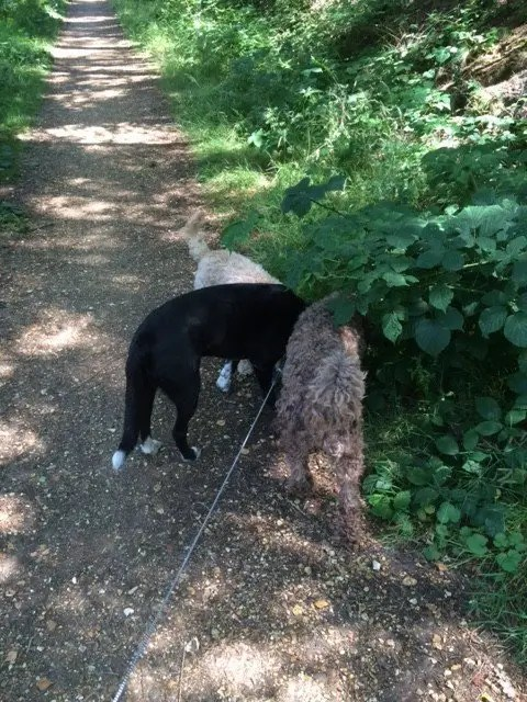 "A ""mooching walk"" along the Castleman Trail"