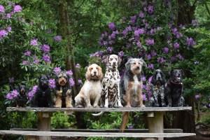 Dog Day Care Ringwood Dogs, Ashley Heath, Ringwood, Hampshire