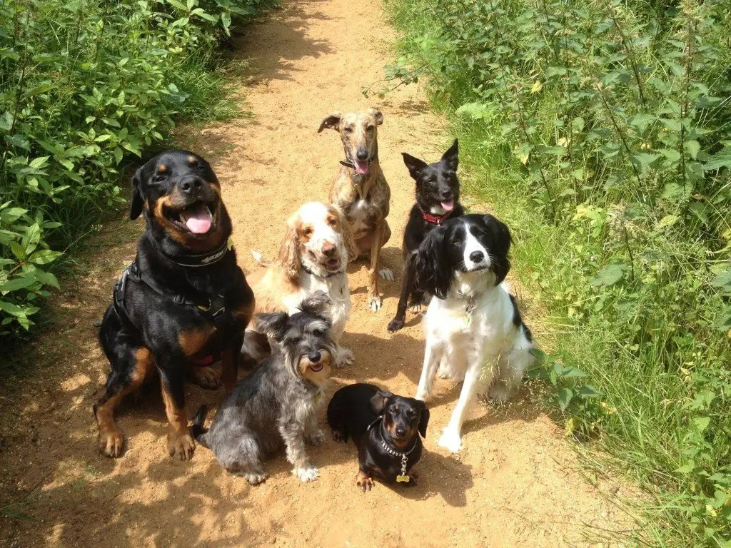 Ringwood Dogs - Dog Walking in the New Forest.
