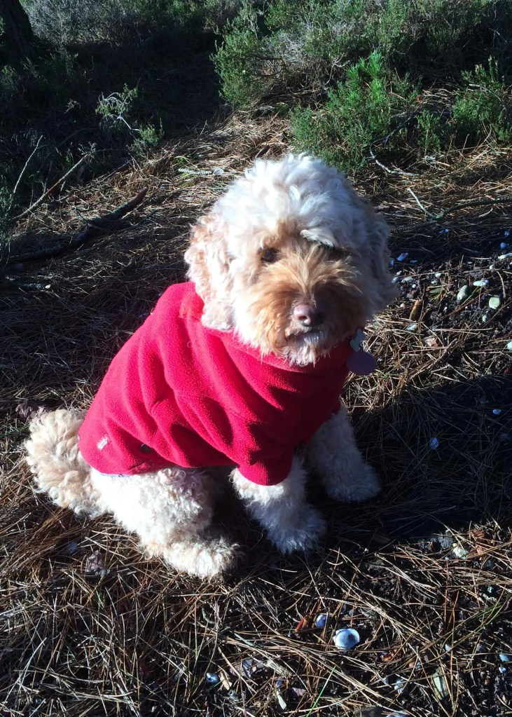 Equafleece winter dog fleece