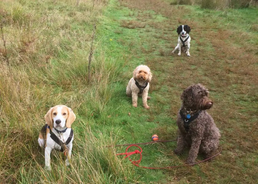 Image Result For Dog Training Classes Ringwood