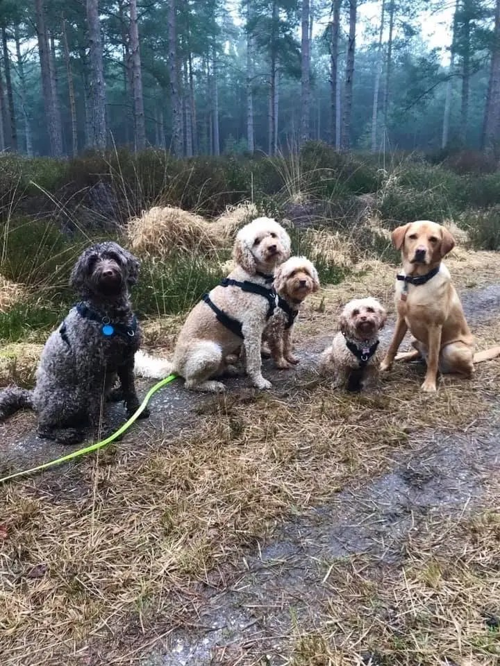dogs in forest